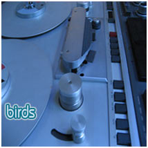 intonational frequency birds