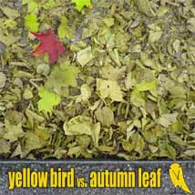 yellowbird vs autumnleaf is it right